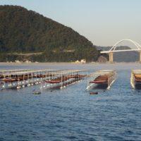田島漁協海苔養殖1