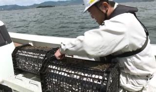 藻場再生実験1