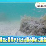 海のアジト