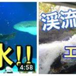 マリホ水族館YouTube